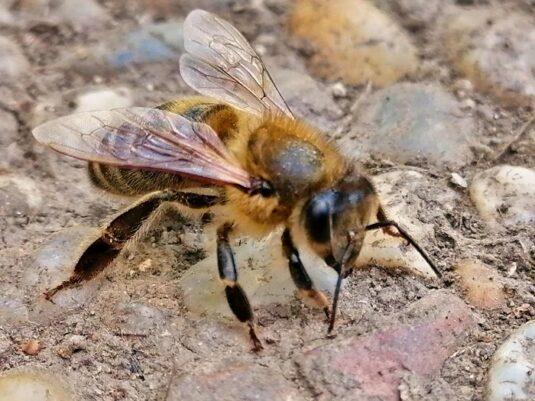 Mitarbeiter der Bee Lounge