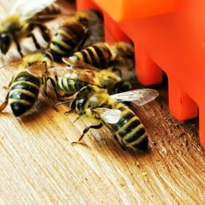 Der Name der Biene