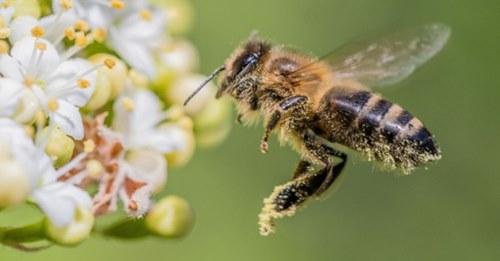 Bienenvölker finden neue Heimat rund um Brunnen