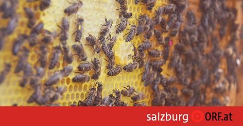 Imkerei: Bis zu 70 Prozent weniger Honig